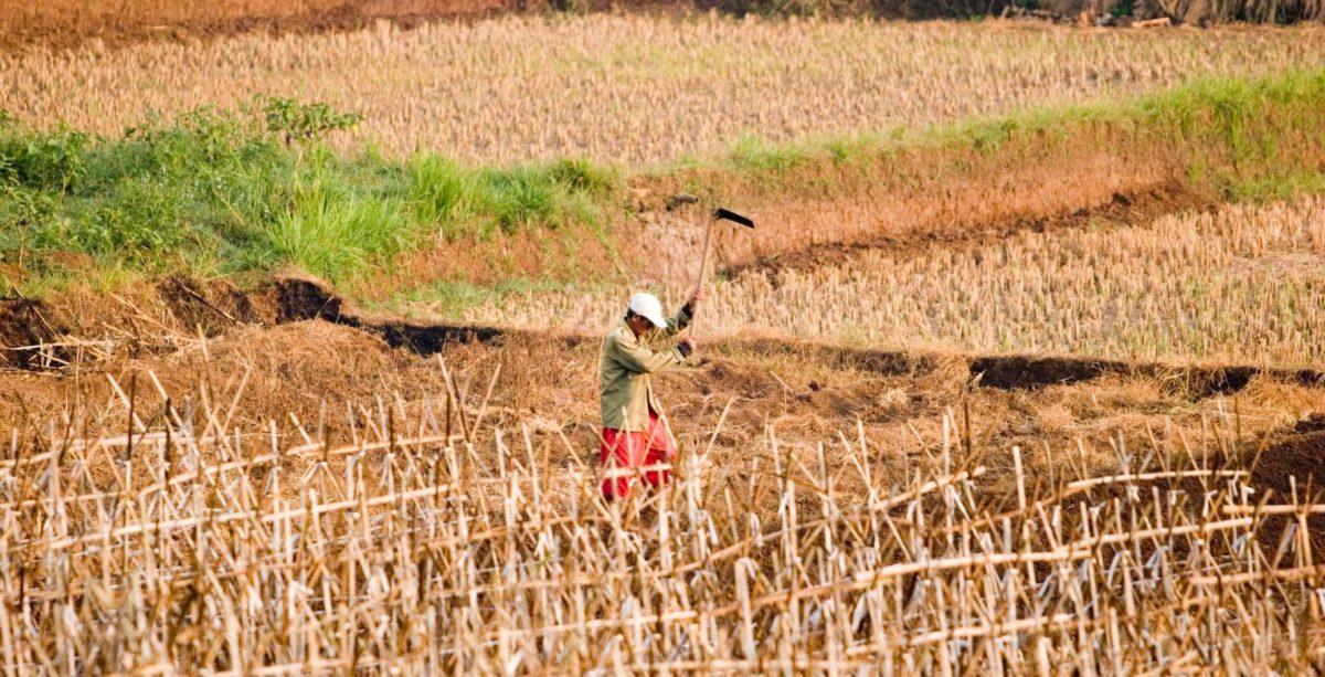 agricoltura_papaleo